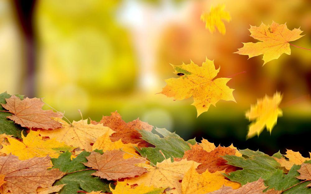 őszi levél_1